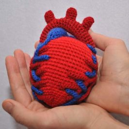 Crochet Anatomical Heart
